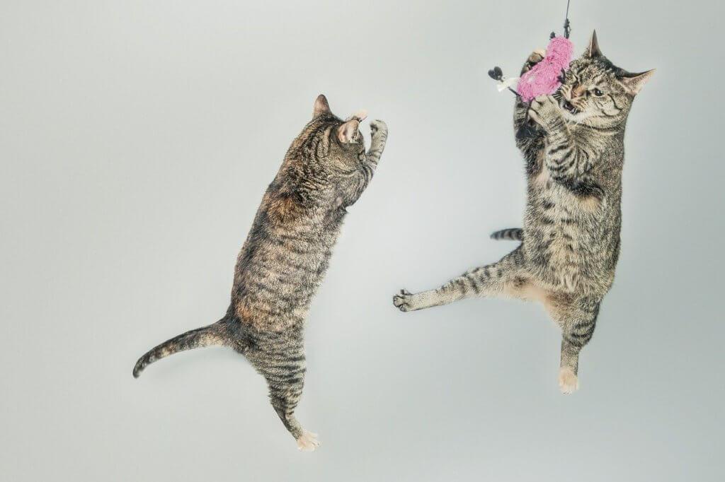 O pulo do gato do método SPIN