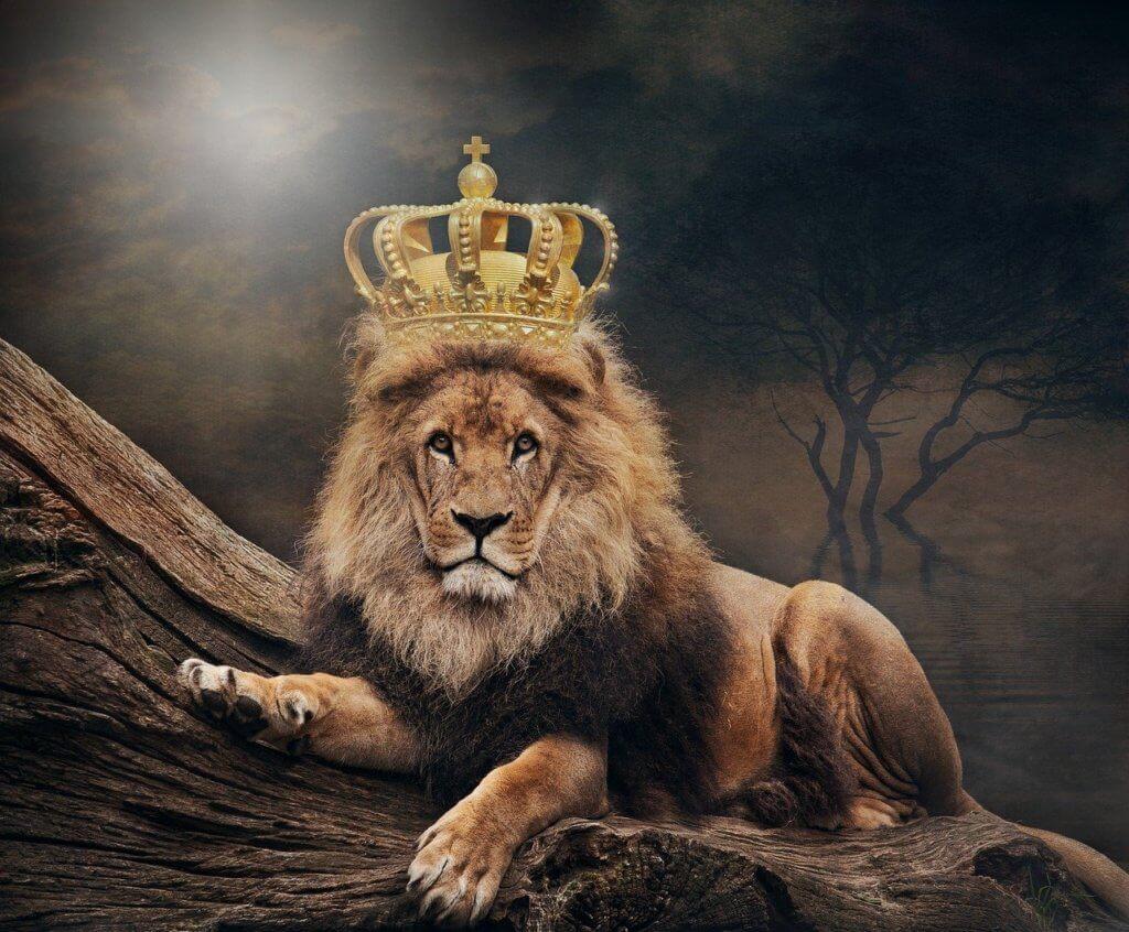 Descubra quem manda no dinheiro - Rei leão